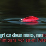 Muzica Lautareasca - DVD original KARAOKE melodii romanesti