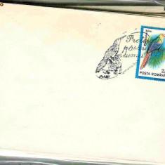 Timbru - Stampila speciala Protejati pasarile lumii, Timisoara 05.06.92, Phoeniculus bollei