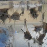 Specii pesti - Vand pesti exotici, scalari