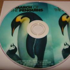 MARSUL PINGUINILOR ( March of the Penguins ) - DVD / 2005 - Voce: Morgan Freeman - Film documentare animal planet, Engleza