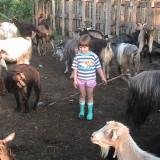 Oi/capre - Capre