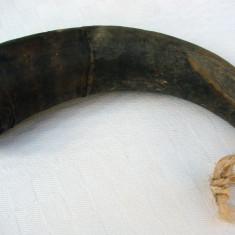 Corn de bovina - obiect decorativ