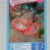 CARTONASE MEGA IMAGE - COMORILE OCEANELOR NR 92 - Cartonas de colectie