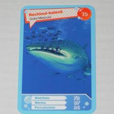 CARTONASE MEGA IMAGE - COMORILE OCEANELOR NR 10 - Cartonas de colectie