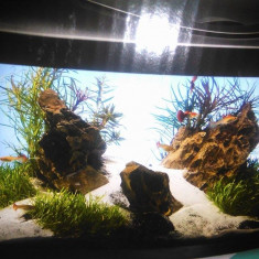 Vand acvariu, 50-60
