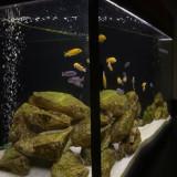 Acvariu 200 litri