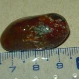 Piatra semipretioasa - zodiacala - mineraloterapie - 2+1 gratis - RBK18025 - Fosila roca