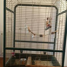 Vand colivie papagali mari