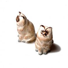 Set solnita Pisici Persane