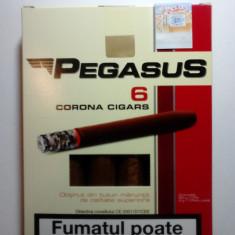 Tigari foi Pegasus /Tutun Maruntit 55 g - Foite tigari