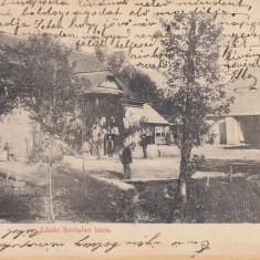 Tautii Maghereus - Carte Postala Maramures pana la 1904, Circulata, Printata